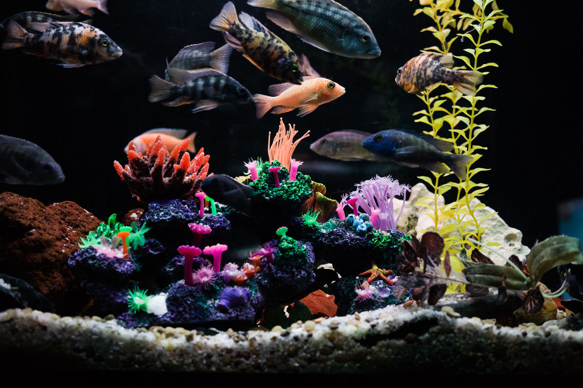 Photo: World Wide Aquarium Fish Tank