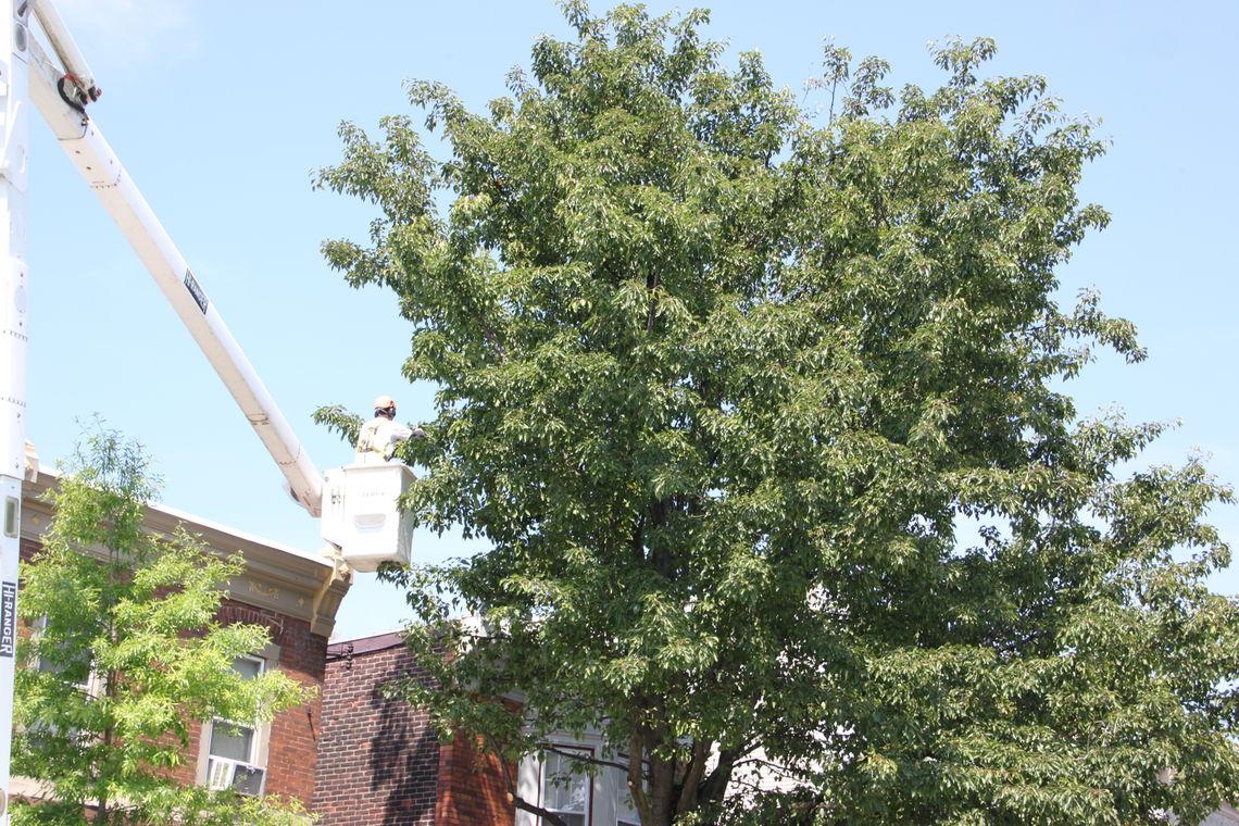 Photo: Cahill Tree Service