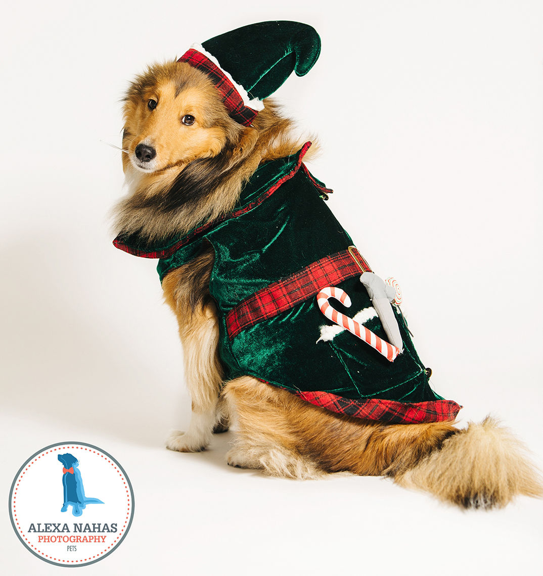 Photo: The 12 Dogs of Christmas