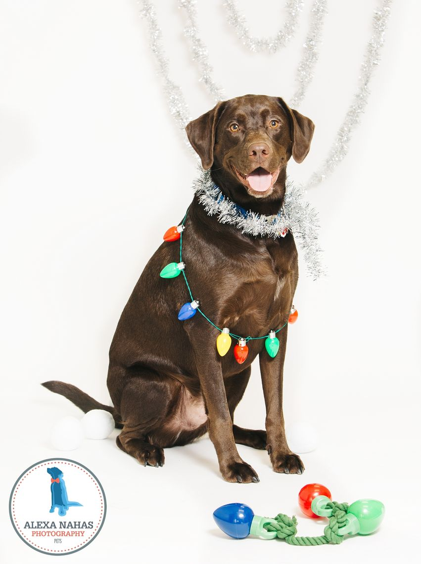 Photo: 12 dogs of Christmas