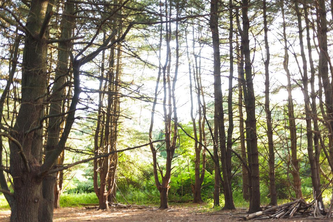 Photo: schuylkill center forest bathing